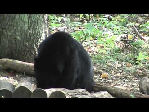 Northern MN Bear Hunt