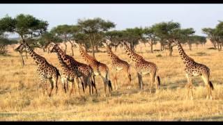 природа в Африке