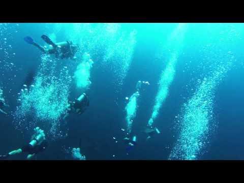 Garmin Virb и гигантская акула  на Семиланских островах