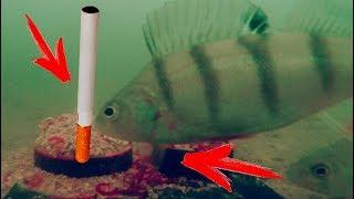 У Старого Пня, Зимняя рыбалка на окуня, Подводные съемки