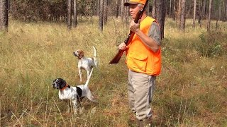 Hunting rats with dogs - Rat hunting dog breeds