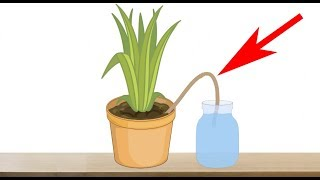 5 Genius Ways to Water Your Plants When You are Away on Vacation - Indoor Plants Automatic Watering