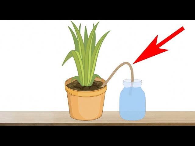 Indoor Plants Automatic Watering, How To Care For Houseplants While On Vacation