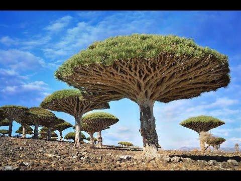 Dünyadaki En Muhteşem Ağaçlar