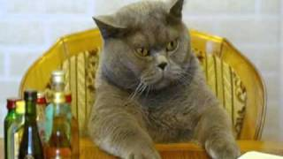 Very Funny Cats 83