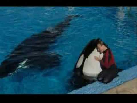Orca Wal Frisst Mensch