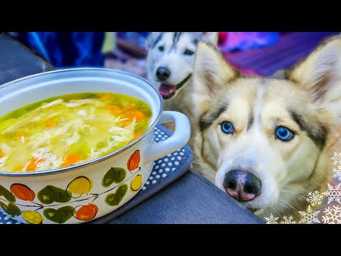 CHICKEN SOUP FOR DOGS DIY How to make Chicken Soup for Dogs | Snow Dogs Snacks 43
