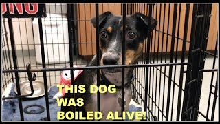 ADORABLE DOGS RESCUED FROM SLAUGHTER HOUSE!  ...