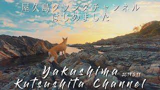 はじめまして!屋久島クツシタチャンネルです! 屋久島に住む4歳の雄犬...
