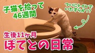 子猫を拾って46週間・ぽてとの日常【生後11ヶ月】