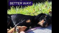 CBD Dog = Happy Dog