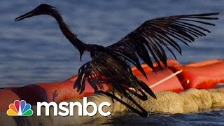 BP Oil Spill 5 Years Later: Wildlife Still Suffering | msnbc