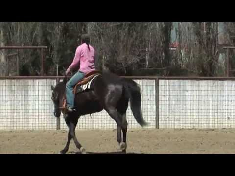 Monty Roberts Willing Partners™ Sierra King Tut for sale