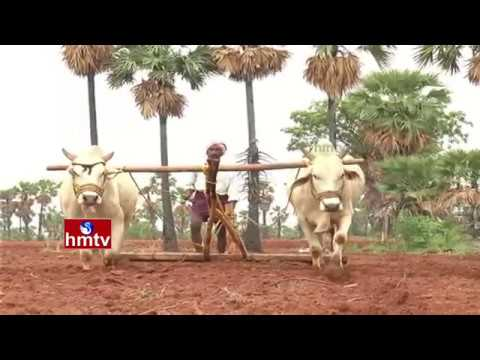 Success Story Of Redgram Farming By Mahabubnagar Farmers | Nela Talli | HMTV