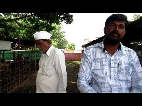 Nilesh Sampatrao Theurkar Dairy Farm Managment Overview