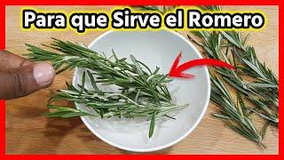 Beneficios del Romero 🌿 Para qué sirve el Romero 🌿 Como se usa el Romero