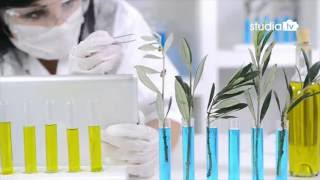 Co to jest GMO i czy trzeba się go bać?