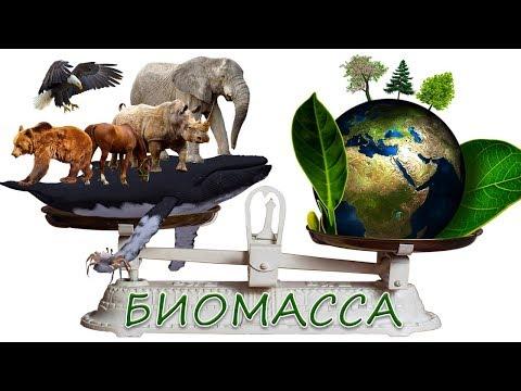 Биомасса Земли, инфографика. Масса людей, растений, животных, грибов, бактерий и вирусов