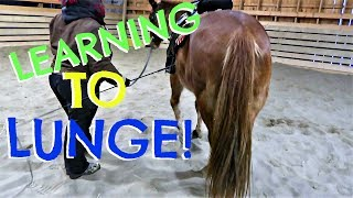 LEARNING TO LUNGE OUR HORSE!