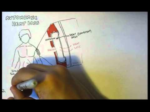Temperature Homeostasis (Regulation)