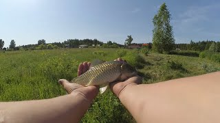 Гиганты домашнего пруда. Ловля Карася и Карпа на поплавок Летом. Рыбалка на домашнем пруду!!!