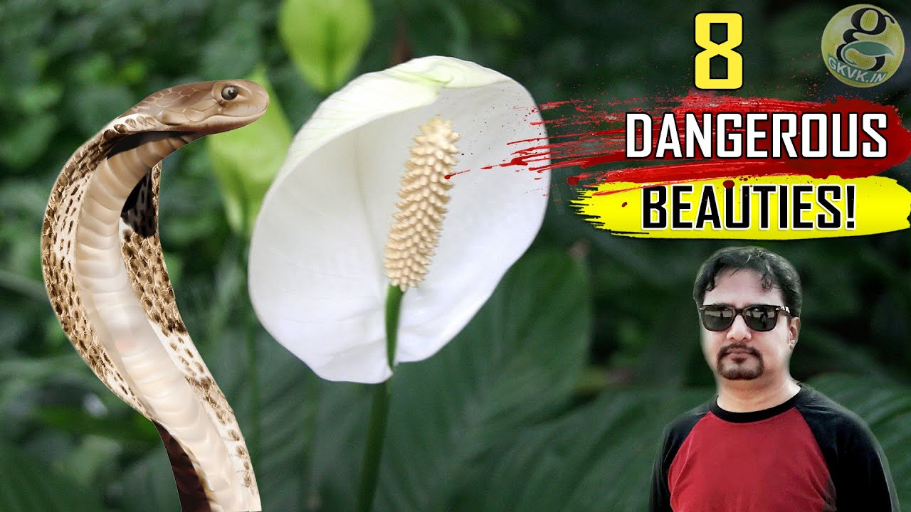 8 Poisonous House Plants That Are Dangerous for Children and Pets on
