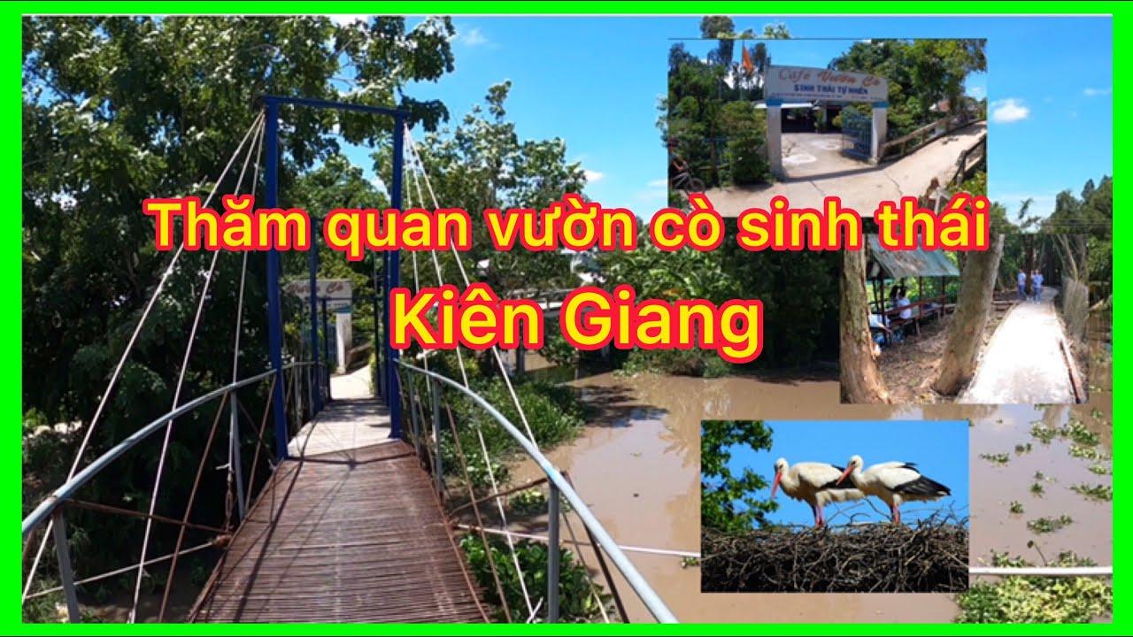 Thăm quan khu vườn cò sinh thái ở Mong Thọ Kiên Giang
