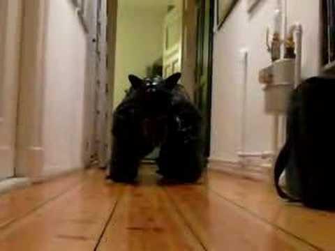 Pup Play Mats | Puppy Play KennelKaynak: YouTube · Süre: 3 dakika9 saniye
