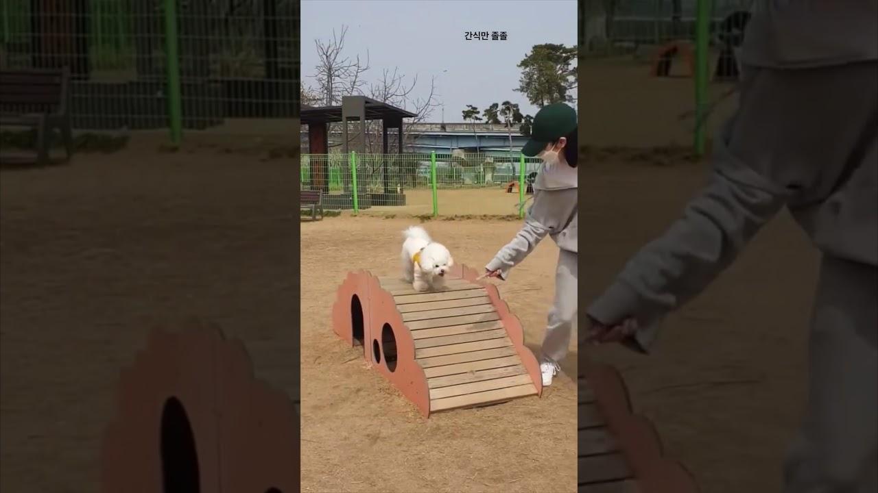 신비 & 앙꼬, 강아지 간식으로 운동시키는 현명한 방법 I Gfriend SinB & Angkko Ways to Exercise with Puppy Snacks