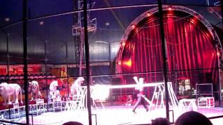 Цирк шапито Демидовых Кошечки2 в Кемерово