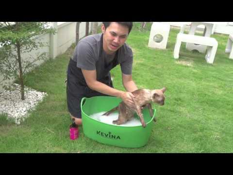 สอนอาบน้ำแมว ง่ายๆ ด้วย แชมพู KEVINA