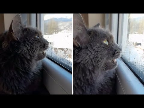 Vocal cat literally attempts to chat with the birds outside