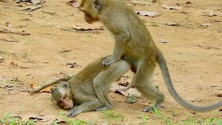 Many babies monkeys when they meet,they would like to make many style to greet to show that friendly