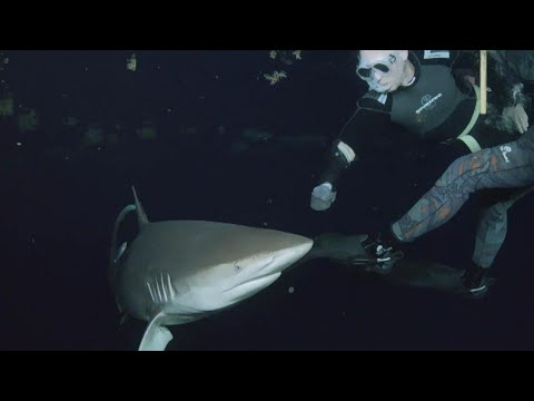 Divers Spend Hours Swimming With Man-Eating Sharks