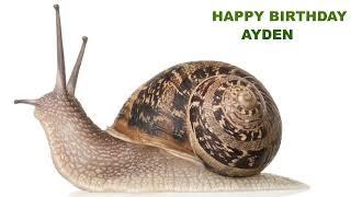 Ayden  Animals & Animales - Happy Birthday