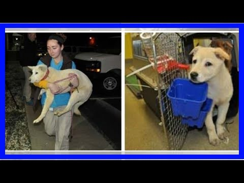 14 Dogs Rescued From The Korean Meat Trade Will Start New Lives In The US| Dog Rescue Stories