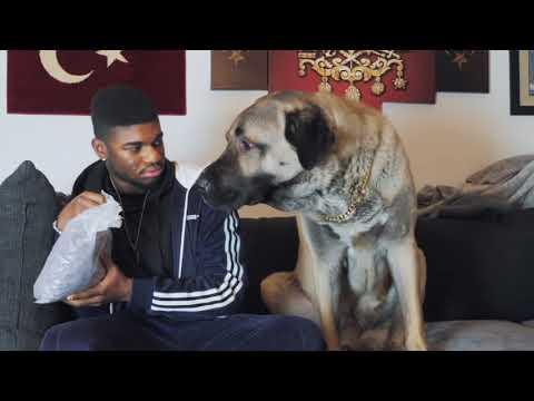 Der Hundesitter 🐶😱mit CEM TV| FRANKY AllSTAR