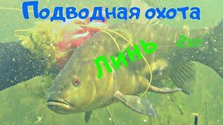 Подводная охота на крупного Линя 2кг Хороший прозрак