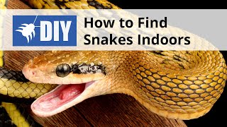 How to Find Snakes Indoors