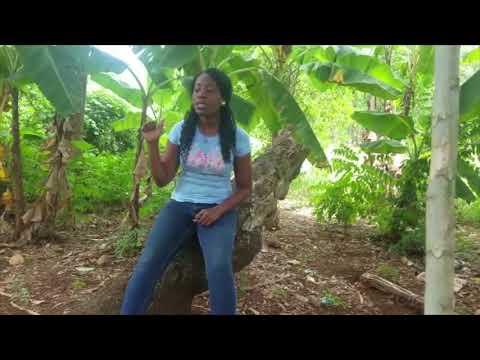 Refleksyon Jenes - Koté Kob Pétro Caribé Pasé