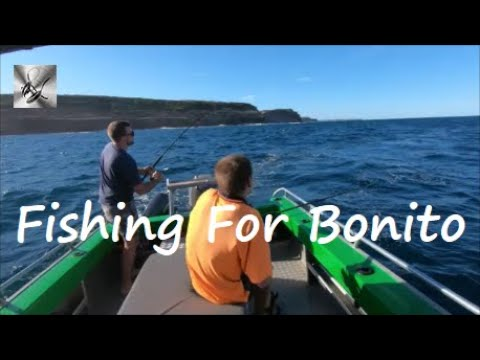 Fishing For Bonito | Fishing & Cooking