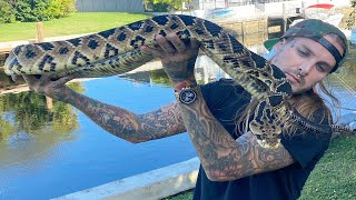 Feeding my King Cobra and Massive Rattlesnakes!!