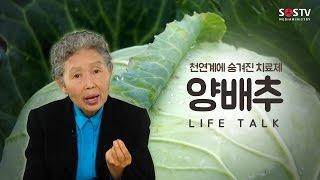 양배추, 천연계에 숨겨진 치료제 [라이프 토크 76회] - 여병주 의사