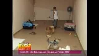 Гостиница для домашних животных. Утро с Губернией. GuberniaTV