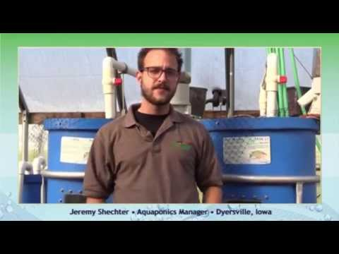 Stems & Scales - Choosing The Right Fish - HydroCycle Aquaponics