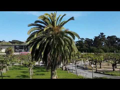 beautiful garden around California Academy of Sciences San Francisco April 2017