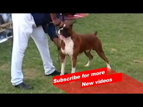 Wow ! Most Amazing dog breeds worldwide | MADRAS CANINE CLUB |