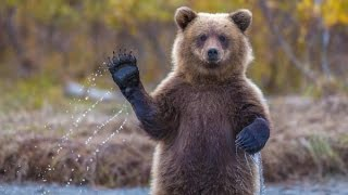Там где медведи ходят! В поисках золота.