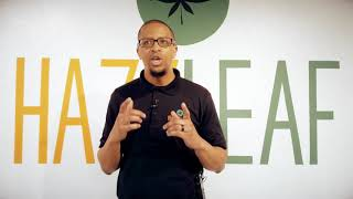 Hazy Leaf   Grand Opening   Main Video