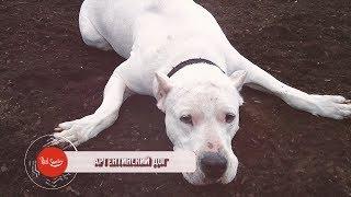 10 Собака, спасших людей от диких животных